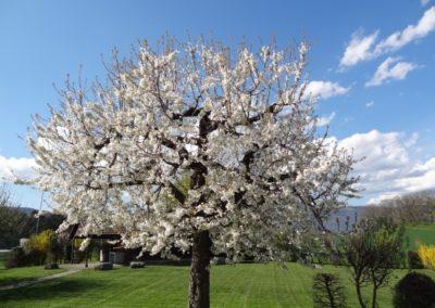 Refuge Chamblon printemps