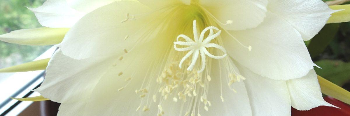 Fleur Cactus_11.6.18