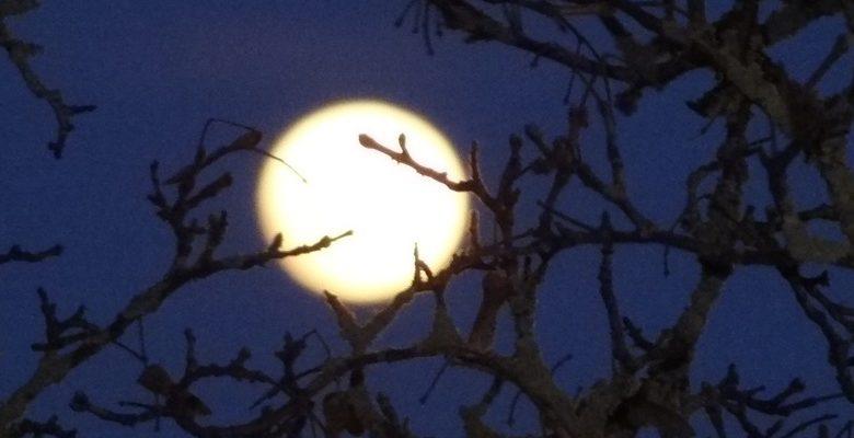 Lune Chamblon