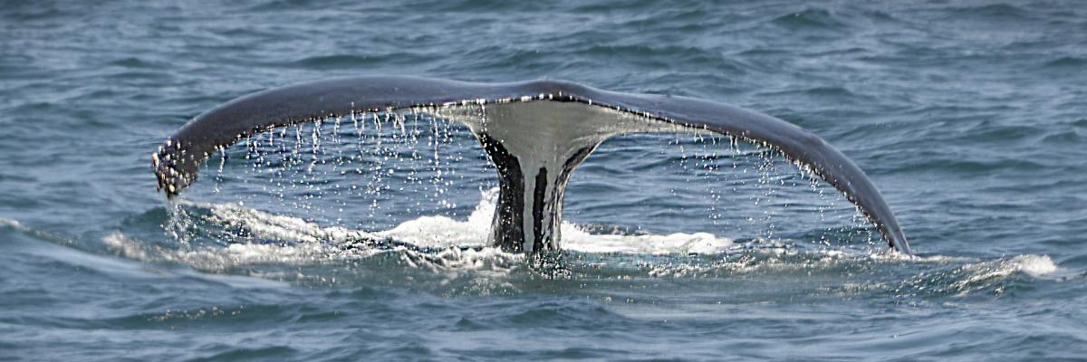 Image de baleine pour Poème Elle était