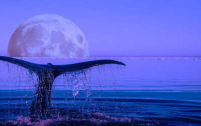 Des baleines, des hommes… et des virus