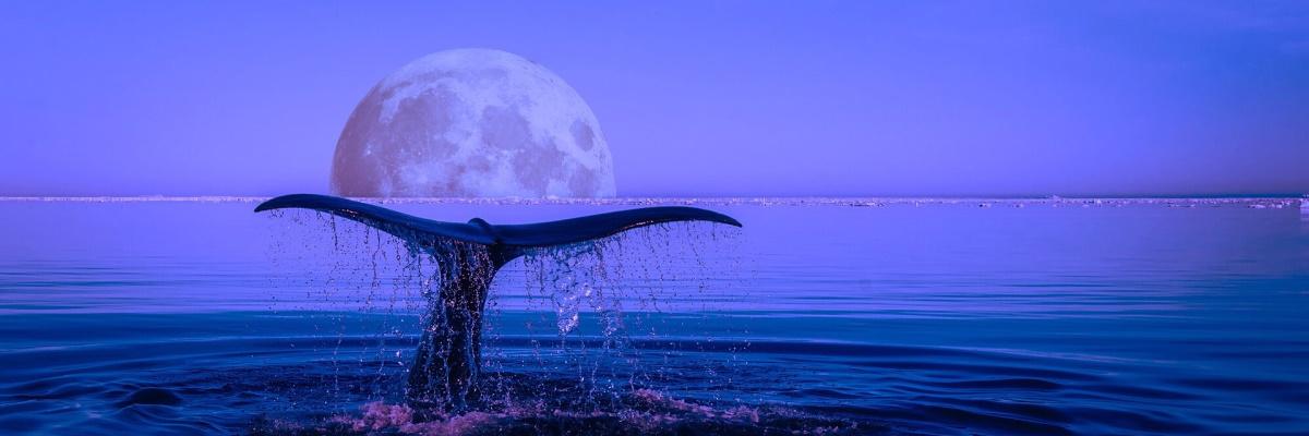 Des baleines, des hommes et des virus